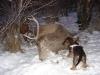 Soma és Ari a bikával